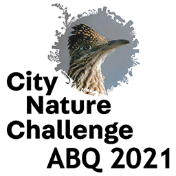 City Nature Challenge logo with roadrunner